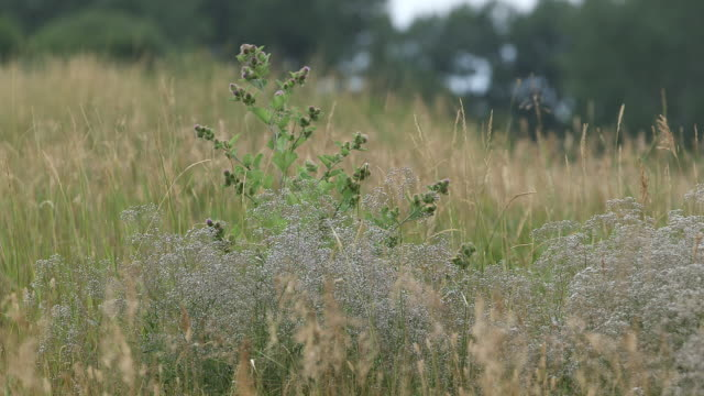 weeds in brown field, overcast day, shallow dof - wiese stock videos & royalty-free footage
