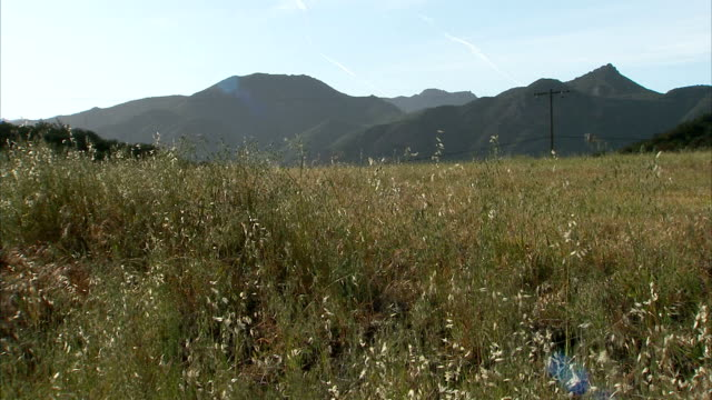 weeds wave in the wind in a valley near the mountains. - prairie stock videos & royalty-free footage