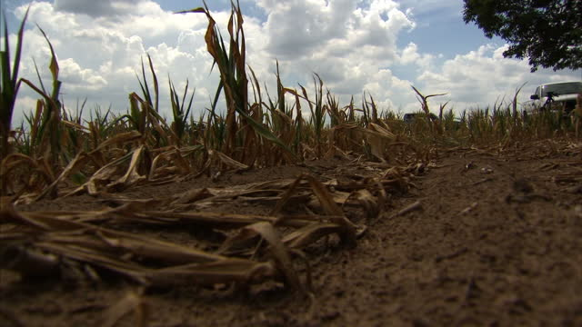 stockvideo's en b-roll-footage met weeks of record breaking temperatures and almost no rain have led to the worst drought in the united states for more than half a century the... - recordbrekend