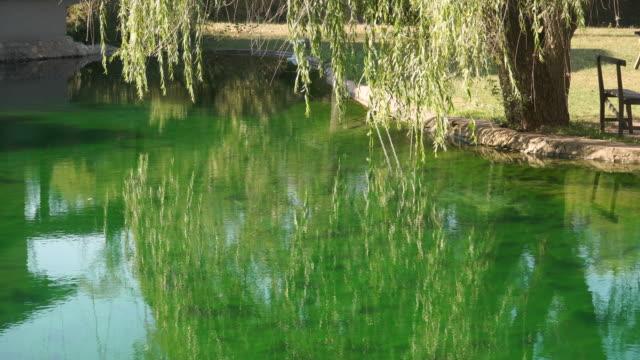 weinende weide und reflexion im grünen wasser - trauerweide stock-videos und b-roll-filmmaterial