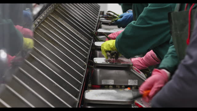 weighing of freshly harvested asparagus at farm near ramsgate, kent, u.k., on thursday, may 6, 2021. - human hand stock videos & royalty-free footage