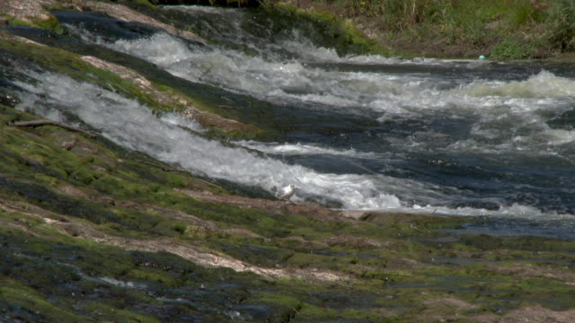 weir in the river nith during the summer - johnfscott video stock e b–roll