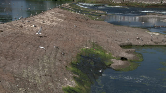 weir in the river nith during the summer - johnfscott stock videos & royalty-free footage