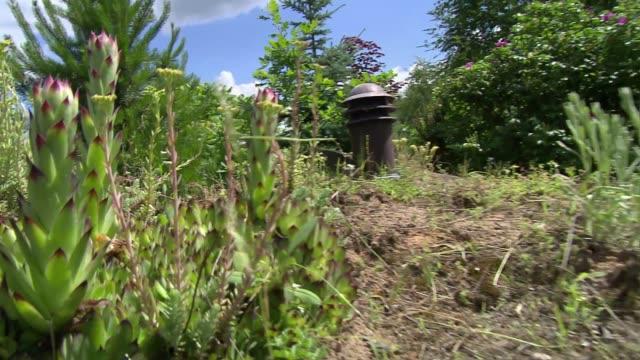 vídeos y material grabado en eventos de stock de well in garden - aguja parte de planta