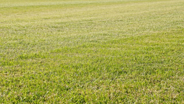 ds well mowed grass lawn - turf stock videos & royalty-free footage