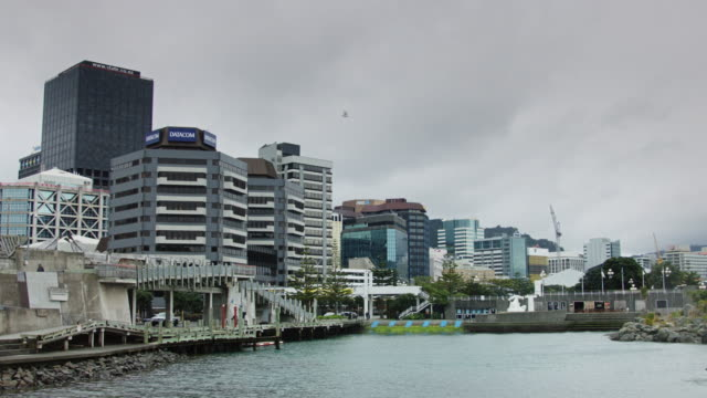 wellington waterfront office buildings - medium group of animals stock videos & royalty-free footage