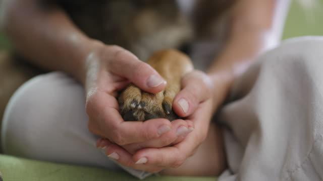 私たちは家族です - 動物の足点の映像素材/bロール