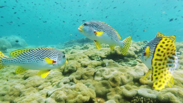we're here to brighten things up - sweetlips stock videos & royalty-free footage