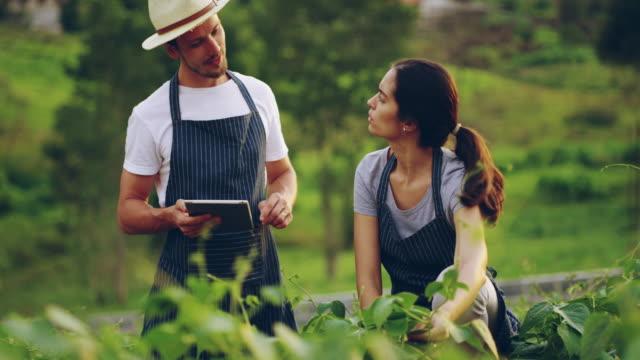 vídeos de stock, filmes e b-roll de estamos no caminho certo - agricultor