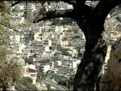 west bank village seen through branches of olive tree - historical palestine stock videos & royalty-free footage