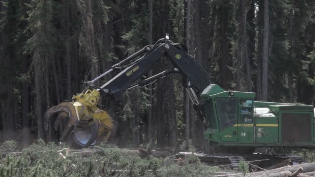 west fraser logging operations in the wilderness near a town called blue ridge alberta canada on june 4th 2015 shots a large machine called a feller... - ontario kanada stock-videos und b-roll-filmmaterial
