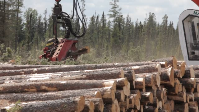 west fraser logging operations in the wilderness near a town called blue ridge alberta canada on june 4th 2015 shots a crane arm called a processor... - ontario kanada stock-videos und b-roll-filmmaterial