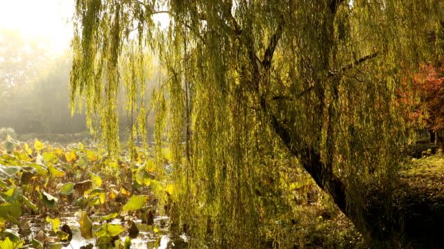 west lake in hangzhou - hangzhou stock videos & royalty-free footage