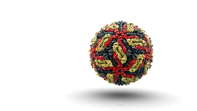 west nile virus - rna virus stock videos & royalty-free footage