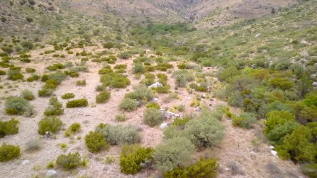 west texas landscape from above - succulent plant stock videos & royalty-free footage