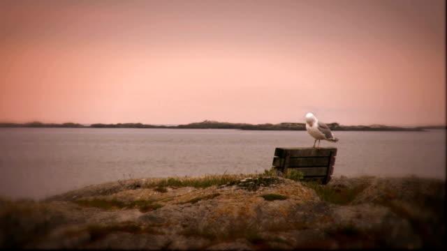 ウエストコーストの朝 - カナダ ビクトリア市点の映像素材/bロール