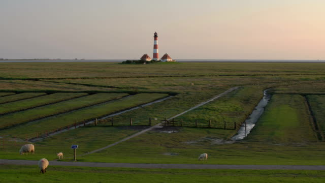 westerhever lighthouse at sunset - herbivorous stock videos & royalty-free footage