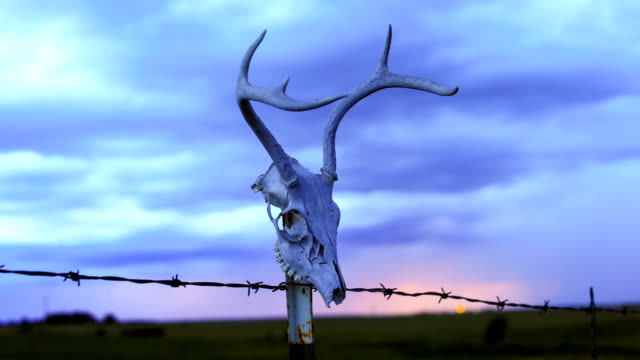 western desert concepts: deer skull on a fence post - wyoming ranch stock videos & royalty-free footage