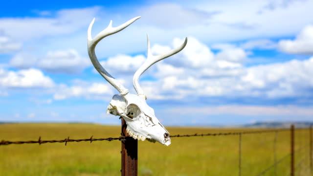 西部砂漠の概念:フェンスポストの鹿の頭蓋骨 - 動物の骨点の映像素材/bロール