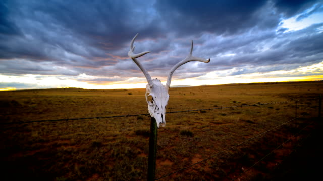 western desert concepts: deer skull on a fence post - animal skeleton stock videos & royalty-free footage