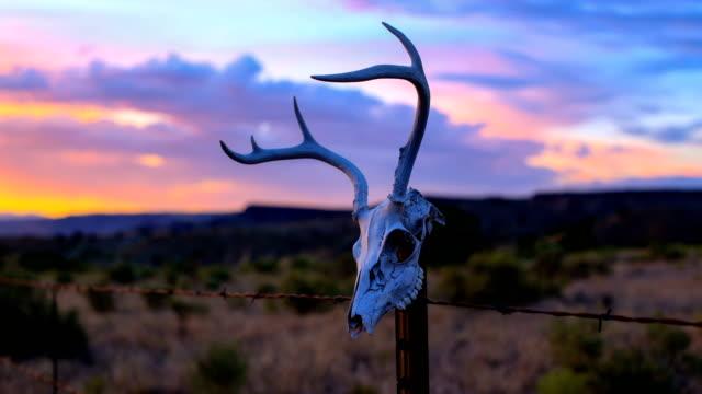 westliche wüste konzepte: hirschschädel auf einem zaunpfahl - tierisches skelett stock-videos und b-roll-filmmaterial