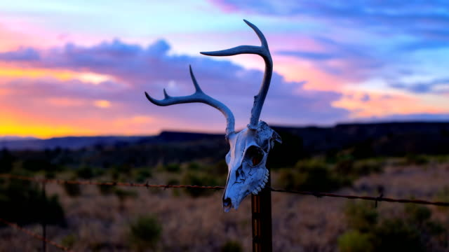 western desert concepts: deer skull on a fence post - ranch video stock e b–roll