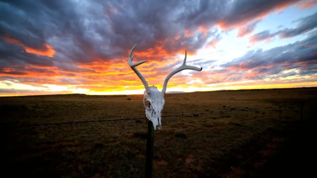 western desert concepts: deer skull on a fence - animal skeleton stock videos & royalty-free footage
