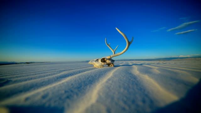 western desert concepts: deer skull on the ground - animal skeleton stock videos & royalty-free footage