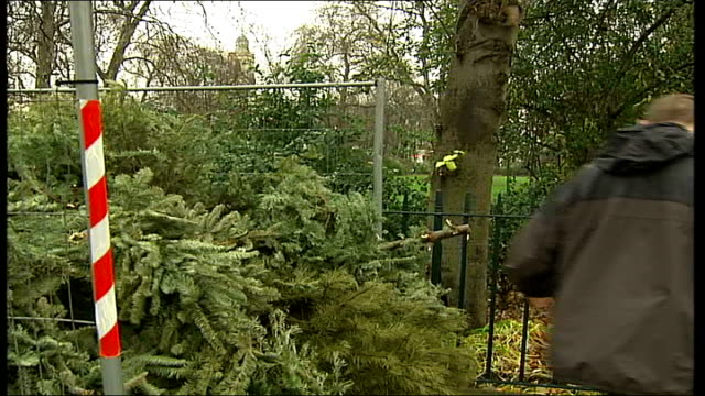 vidéos et rushes de westminister council's tree recycling scheme england london westminster ext man along carrying christmas tree over shoulder and throwing it on top of... - sapin de noël