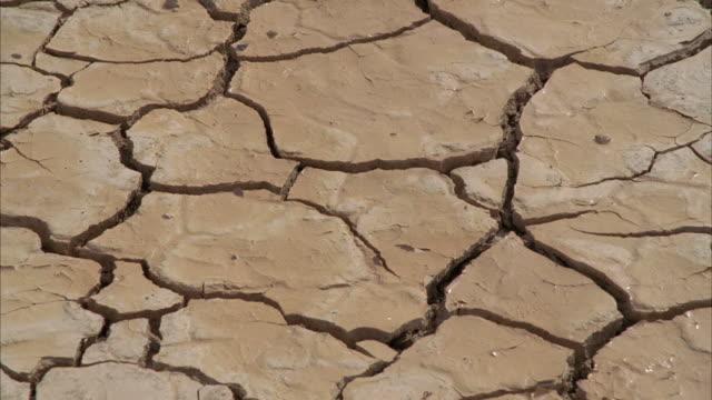 CU Wet cracks on arid desert / Mojave, California, USA