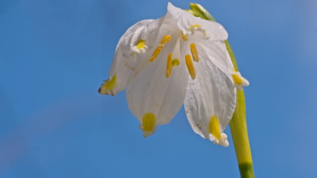 slo mo wet flower head of a snowdrop - named wilderness area stock videos & royalty-free footage