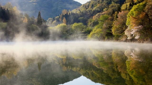 ws wet fog moving over seryangji lake in morning / hwasun, jeollanam-do, south korea - 湖 個影片檔及 b 捲影像