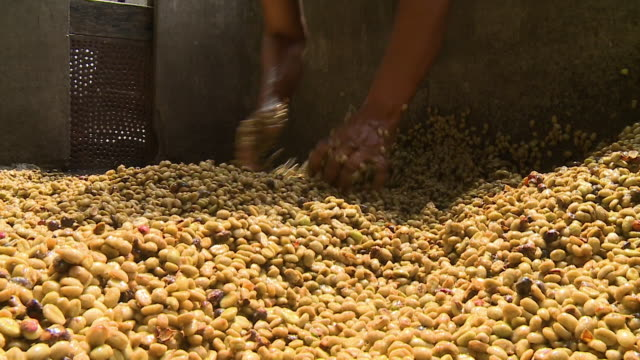 wet peanuts in focus being stirred - nut food stock videos & royalty-free footage