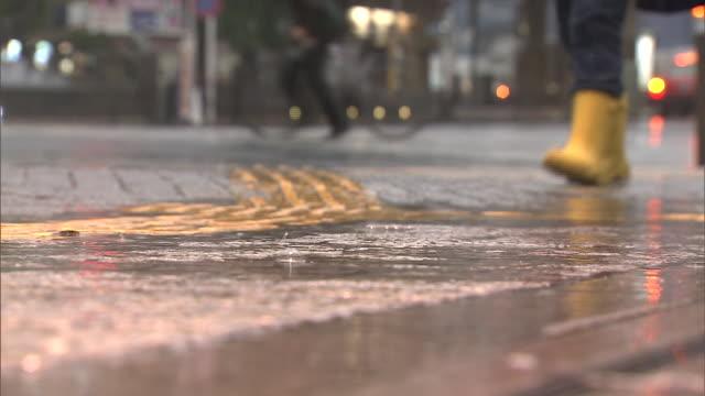 wet road in rain, shibuya, tokyo, japan - nass stock-videos und b-roll-filmmaterial