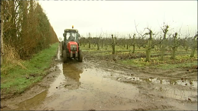 Wet weather causes food price increases and way farms grow food ENGLAND Kent Fourayes Farm INT Apples in metal water tank and sorted by factory...