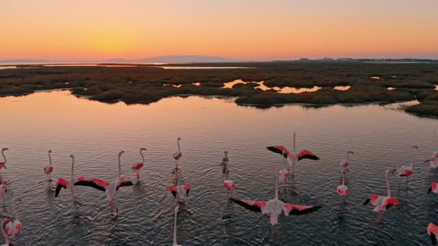 wetland and flamingos - flamingo bird stock videos & royalty-free footage