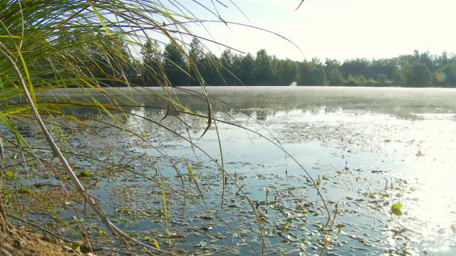 HD DOLLY: Wetland In Mist