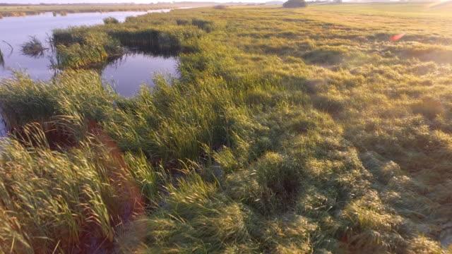 wetland marsh on the prairies in late summer - duck stock videos & royalty-free footage