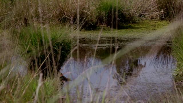 wetland, south downs - サウスダウンズ点の映像素材/bロール