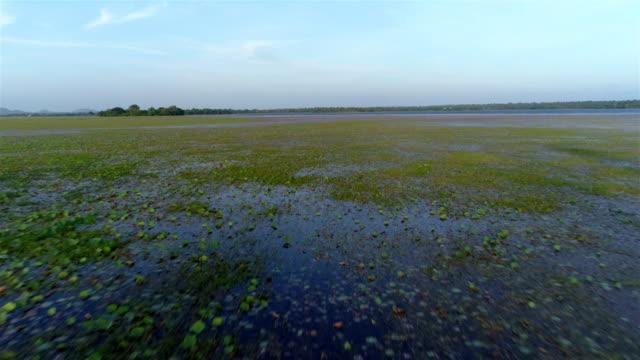 vídeos y material grabado en eventos de stock de zona húmeda - charca