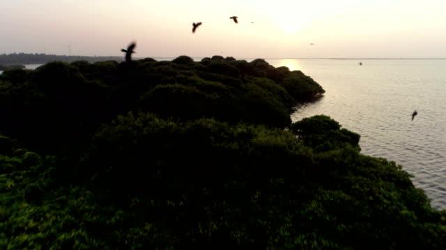 Wetlands of western Sri Lanka