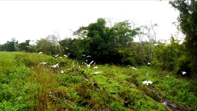 Wetlands, Pacaya Samaria, Peruvian Amazon, Peru