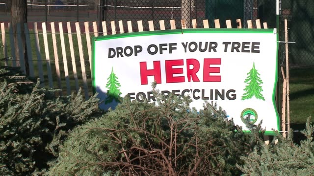 wgnchristmas tree drop off area for recycling in chicago on dec 30 2016 - kieferngewächse stock-videos und b-roll-filmmaterial