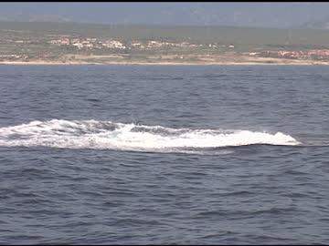 クジラの違反 - バハカリフォルニア点の映像素材/bロール