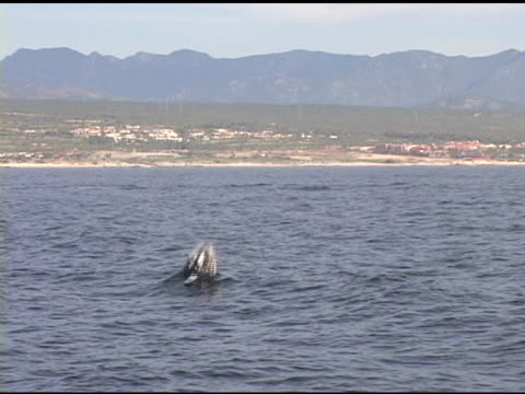 whale breach - whale watching stock videos & royalty-free footage