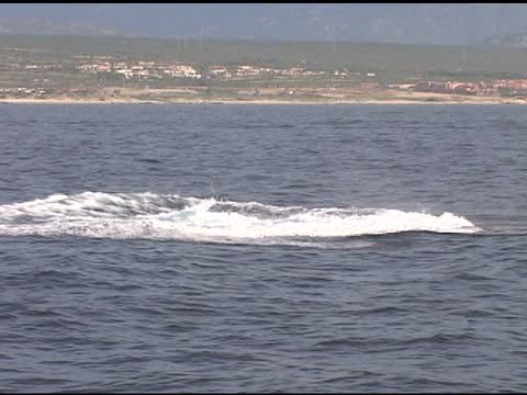 balena violazione - penisola di bassa california video stock e b–roll