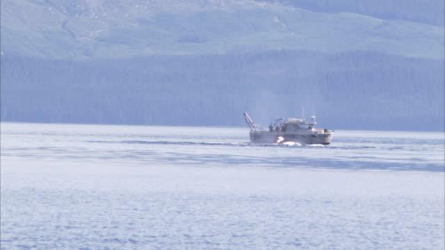 a whale breaches near a small boat off the coast of alaska. - cetacea bildbanksvideor och videomaterial från bakom kulisserna