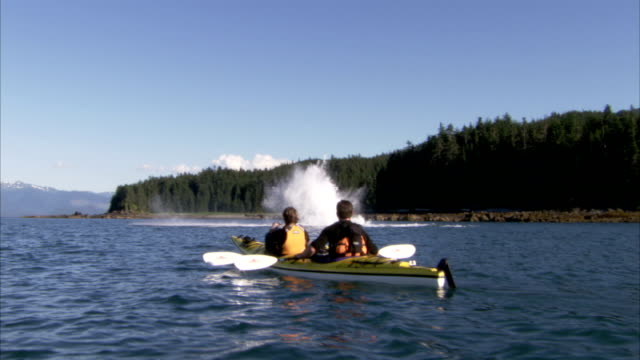 a whale breaches the ocean near two men in a kayak. - cetacea stock videos & royalty-free footage