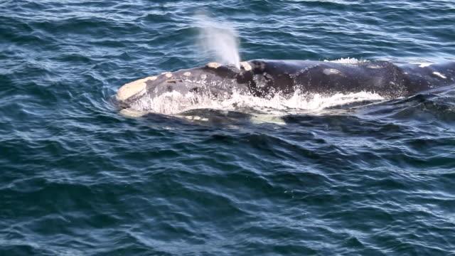 whale atem - sichtbarer atem stock-videos und b-roll-filmmaterial