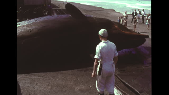 whale carcass on flatbed rail car into factory yard, men w/ cutting tools, african male using wench to move whale, biologist dr. ray gambell cutting... - campione di laboratorio video stock e b–roll